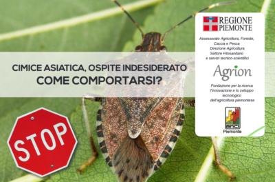 Informazioni sulla cimice asiatica Haliyomorphahalys